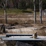 A dog sits atop glass plates at a deserted field that was once part of the stadium where the 2008 Olympic Games baseball competition was held. Picture: REUTERS/David Gray