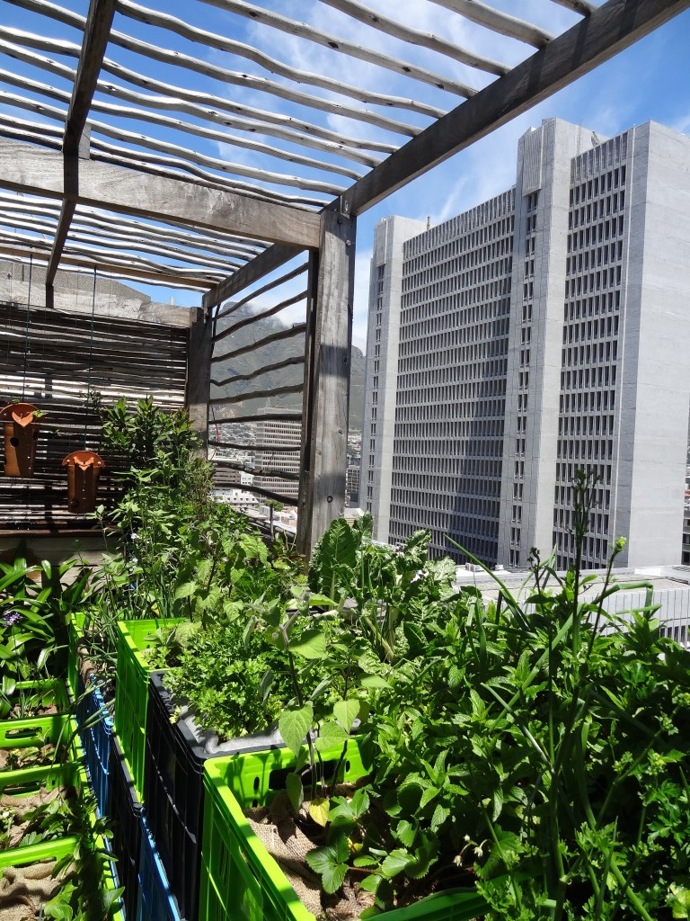 Look to the sky: City of Cape Town's roof top food garden. Photo: Russell Galt, 2012