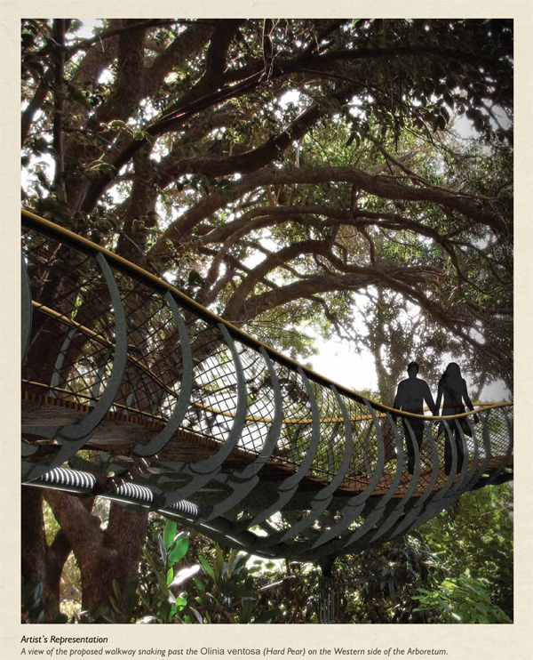 kirstenbosch tree canopy walkway 182012 corrected.cdr